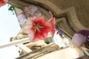 Pünkösdi virágálom